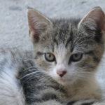 Pompy ciepła - opinie użytkowników Pompy ciepła - opinie użytkowników - cat11 150x150