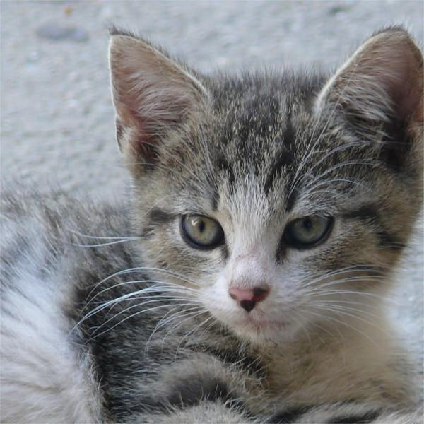 cat11.jpg cat11.jpg - cat11